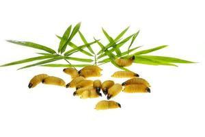 worm palmblad foto