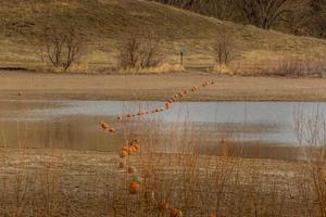 bouys over het meer foto