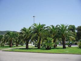 palmbomen in het park van adler city, rusland foto