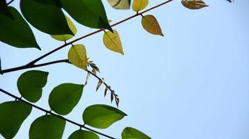 close-up prachtig uitzicht op de natuur groene bladeren op wazig groen foto