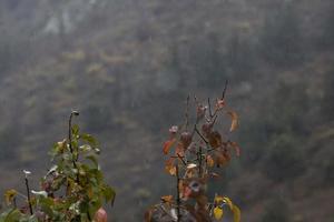 waterdruppels op boomstokken in het herfstseizoen foto