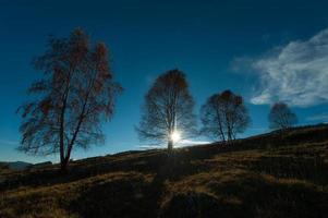 berkenbomen in een weiland in de herfstzon foto