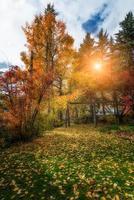 herfstkleuren op zwitserse alpen foto