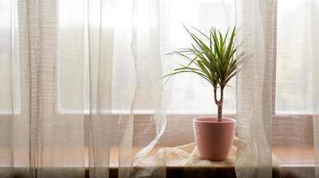 palmboom in bloempot op vensterbank thuis foto