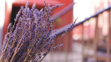 gedroogde lavendeltrossen op onscherpe achtergrond foto