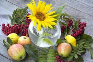 zonnebloem, lijsterbestak met bessen en bladeren, appels foto