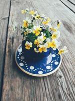 gele viooltje bloemen in blauwe keramische kop op schotel, op houten veranda achtergrond. stilleven in rustieke stijl. close-up bekijken. zomer of lente in de tuin, platteland lifestyle concept. kopieer ruimte foto
