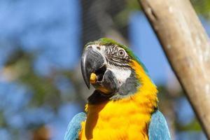 ara die buiten op een boomtak eet in Rio de Janeiro foto