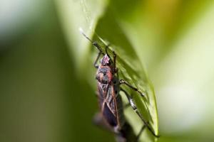 bug op blad foto