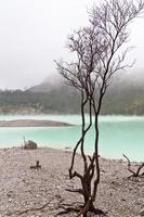 dode boom en vulkanische krater foto