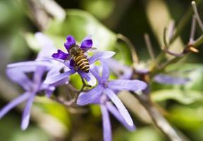 bijen bovenaanzicht foto