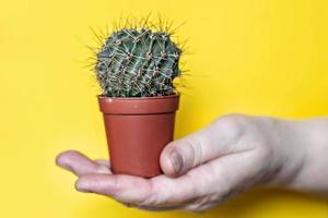 in de hand van een vrouw, een cactus in een pot op een gele achtergrond foto