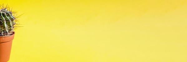deel van een cactusplant in een bloempot op een gele achtergrond.banner foto