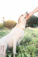 schattige hond van gemengd ras in het park wachtend op adoptie foto