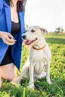 mooie jonge vrouw die in het gras zit en haar hond knuffelt in het park foto