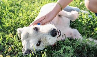 jonge vrouw die haar hond voedt in het park op een zonnige zomerdag foto