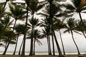 silhouet rij palmbomen op tropisch eiland bij slecht weer dag. foto