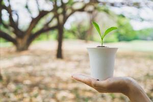 wereld milieu dag concept. hand met plant in pot. foto