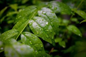 waterdruppel op blad foto