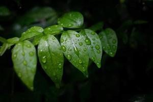 waterdruppel op blad met kopieerruimte foto