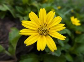 gele bloem met onscherpe achtergrond foto