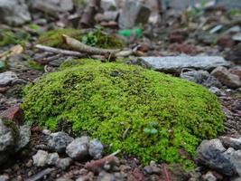 mooi groen mos op de vloer, macro foto