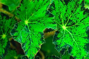 achtergrond groene bladeren natuur liefde landschap foto