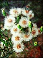 bloem bloesem close-up natuur achtergrond foto
