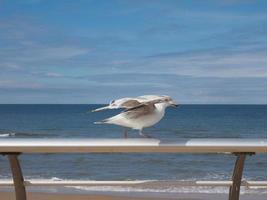 meeuw aan zee foto
