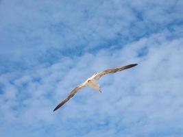 zeemeeuw die over de blauwe lucht vliegt foto