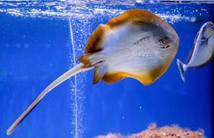 onderwaterbeeld van vissen in de zee foto