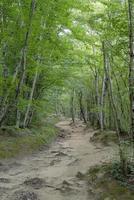 groen bos vol bomen foto