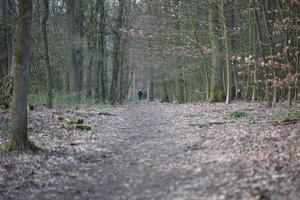 weg in duits bos achtergrond stock photography hoge kwaliteit prints foto