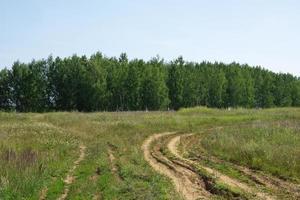 de weg in het veld, naar het bos foto