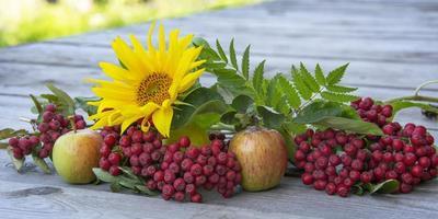 zonnebloembloem naast rode lijsterbes en rijpe appels foto