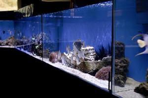 aquaria met vissen in oceanarium foto