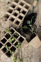 close-up procesplanten verplanten foto