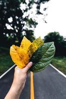herfstblad in groen bos, weg naar bos foto