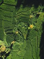landschap rijstveld in Azië, luchtfoto foto