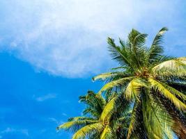 kokospalm en de helderblauwe lucht foto