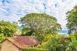 natuur met palmbomen van tropisch eiland ilha grande brazilië. foto