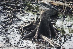 mangroven die zijn gekapt en verbrand foto
