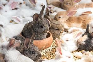 groep konijnen die in dierenwinkel rusten foto