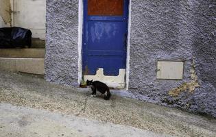 zwarte kat achtergelaten op straat foto
