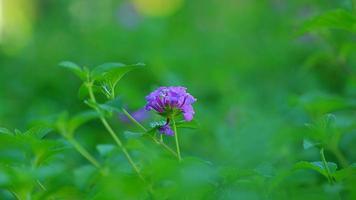 paarse bloemetjes op een groene achtergrond foto
