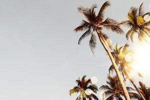 tropische palm kokospalmen op zonsondergang hemel flare foto