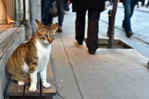 mooie zwerfkat die mensen op straat zit te kijken foto