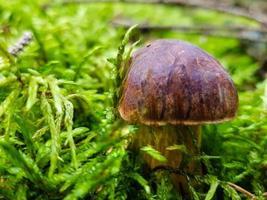 paddenstoelen op de grond van een bos foto