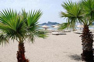 zandstrand met palmbomen in turkije, middellandse zee foto