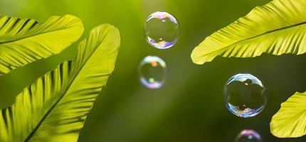 waterbellen drijven en vallen op groene bladeren. foto